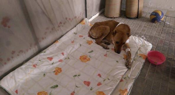 mujer-construye-refugio-de-animales-en-iran8