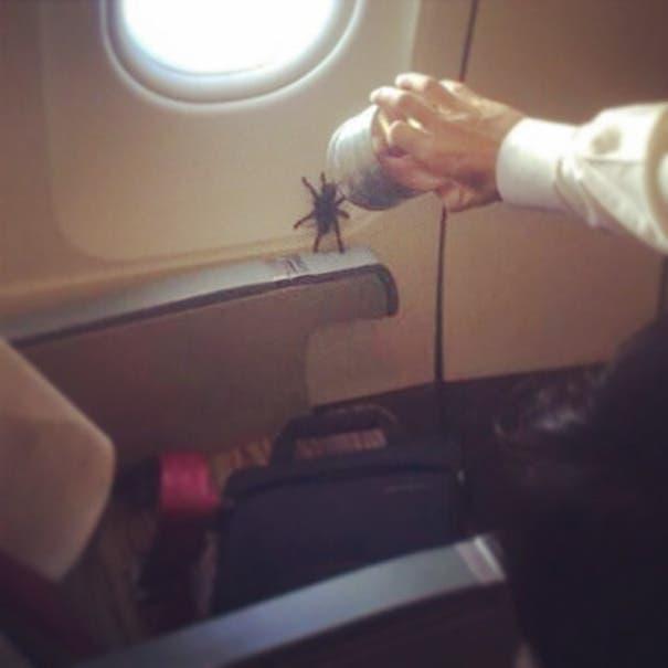 pasajeros molestos avion 13