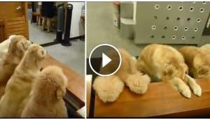 perritos-rezan-antes-de-comer