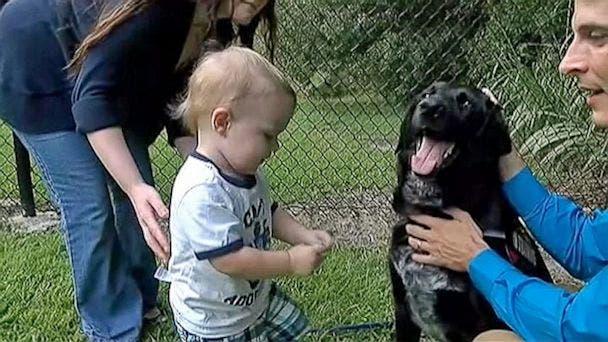 perro-alerta-sobre-abusos-a-nino1