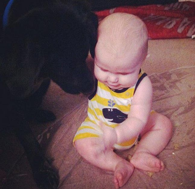perro-alerta-sobre-abusos-a-nino3