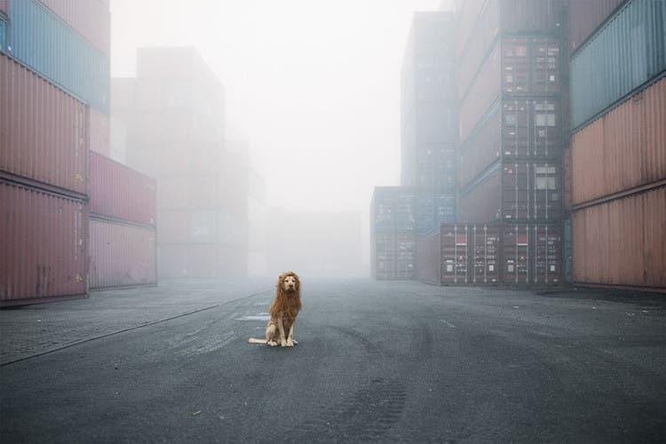 perro leon 1