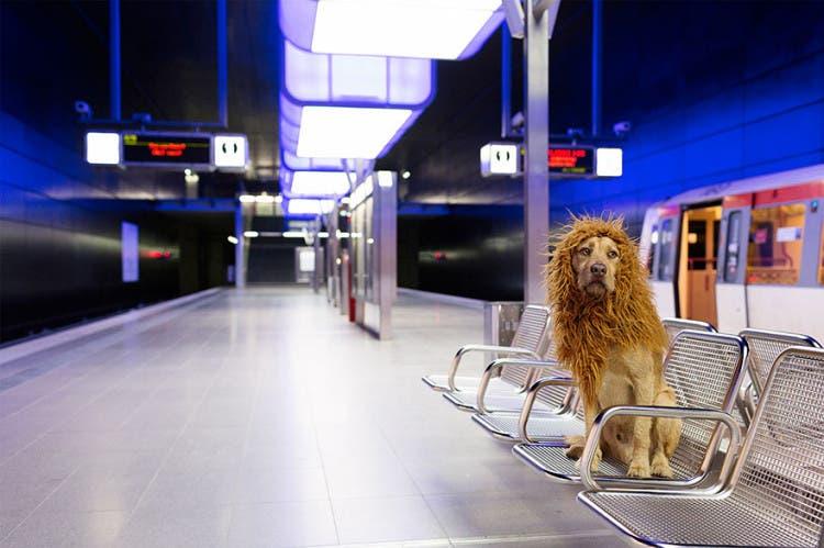 perro leon 14