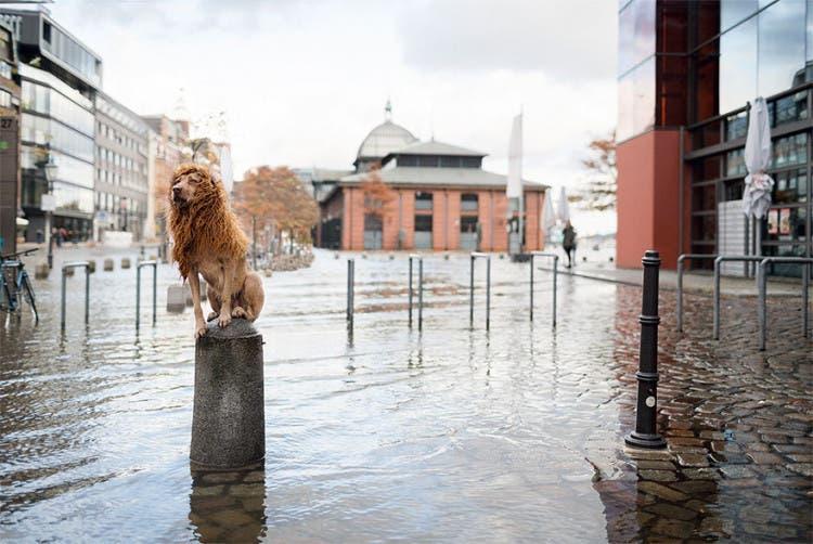perro leon 2