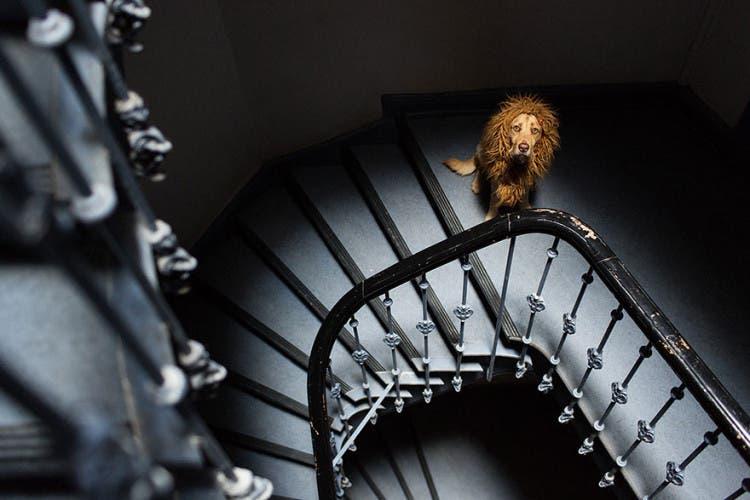 perro leon 4
