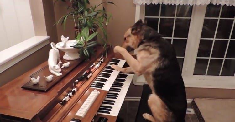 recopilacion-de-perros-inteligentes2