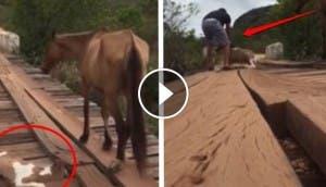 rescate caballo puente id