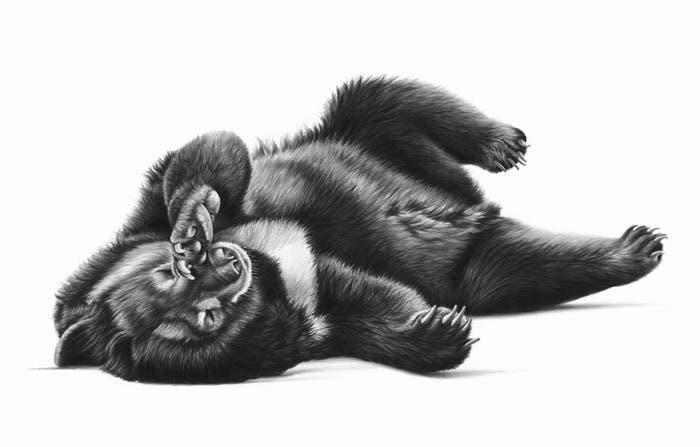 richard-seymonds-arte-realista-animales-salvajes-1