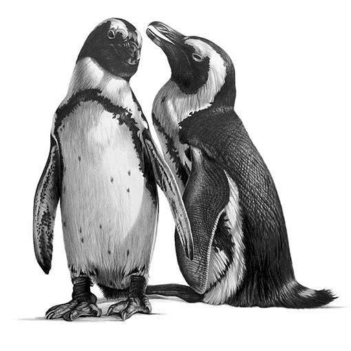 richard-seymonds-arte-realista-animales-salvajes-3