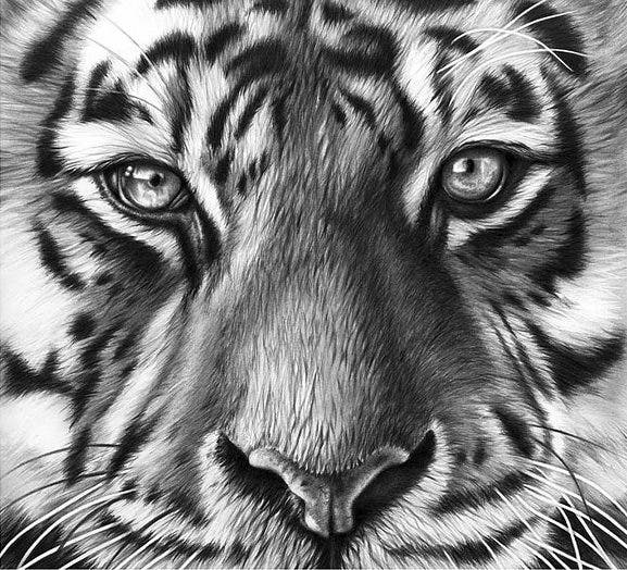 richard-seymonds-arte-realista-animales-salvajes-4