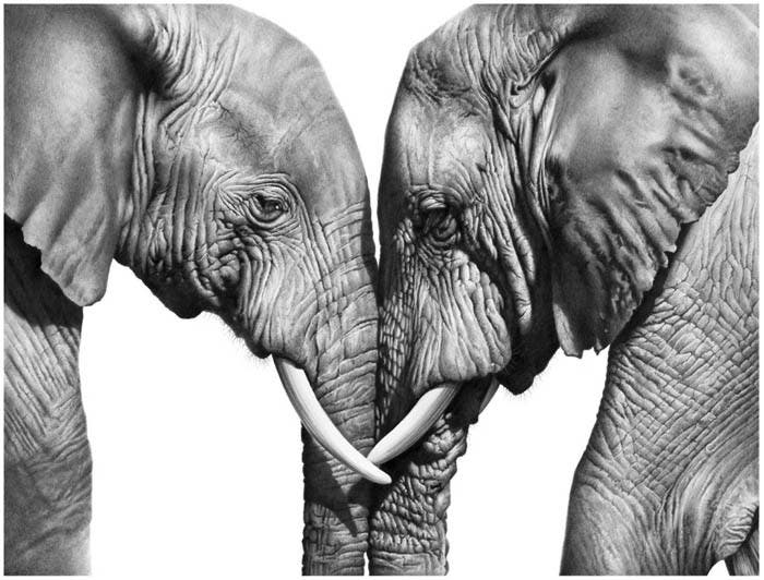 richard-seymonds-arte-realista-animales-salvajes-7
