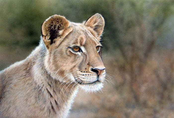 richard-seymonds-arte-realista-animales-salvajes-8