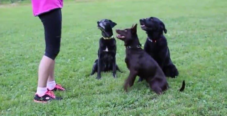 tres-perros-que-hacen-muchos-trucos