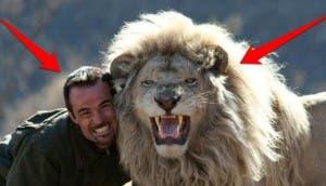 viviendo con leones 11