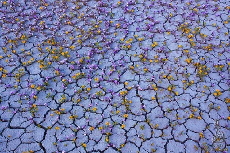 flores-desierto-de-utah