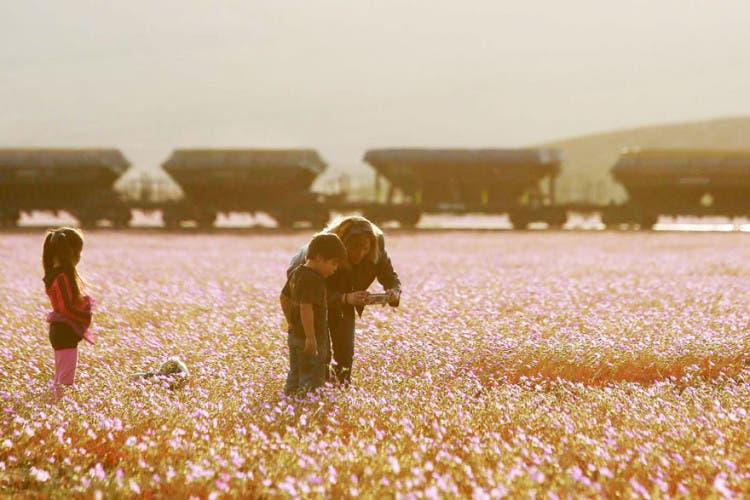 flores-en-desierto-mas-arido-del-mundo-2