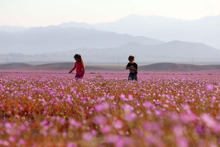 flores-en-desierto-mas-arido-del-mundo-4