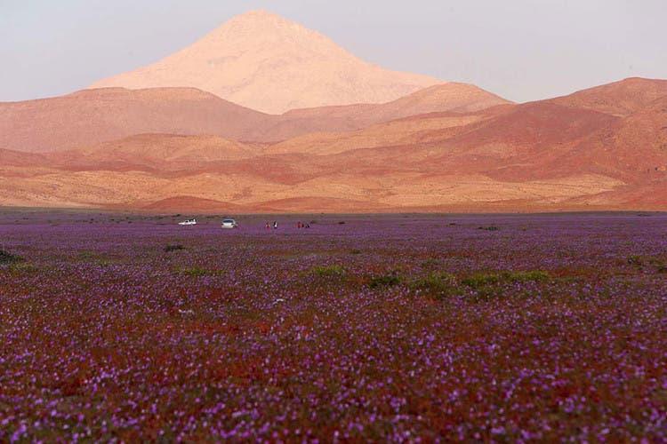 flores-en-desierto-mas-arido-del-mundo-6