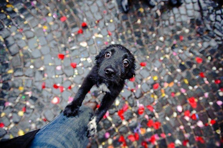 fotos de perros 1