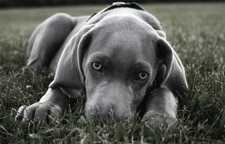 fotos de perros 10