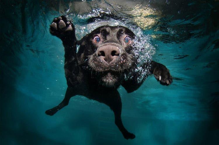 fotos de perros 5