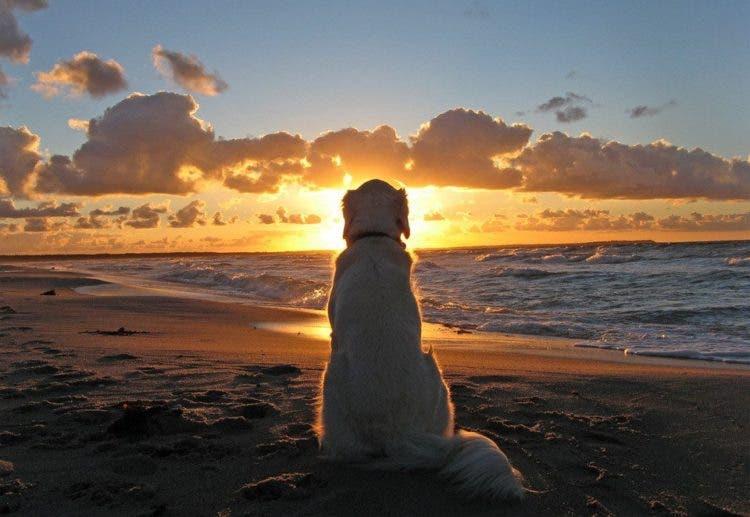 fotos de perros 6