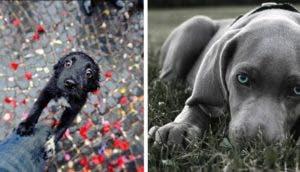 fotos de perros id