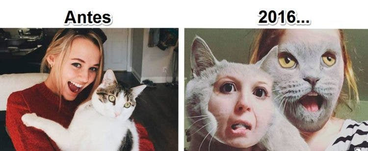 gatos y tec 14