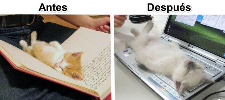 gatos y tec 2
