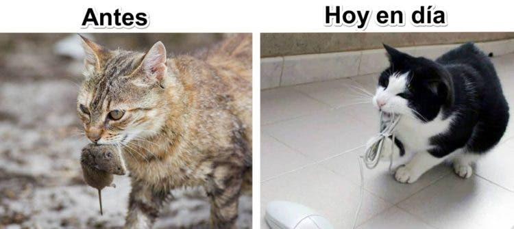 gatos y tec 4