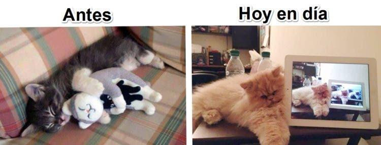 gatos y tec 7