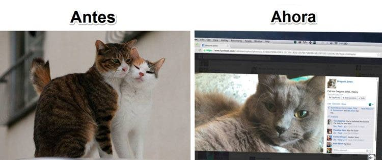 gatos y tec 9