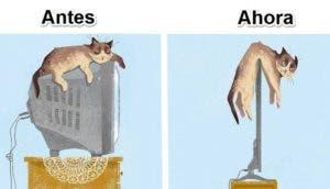 gatos y tecnologia id