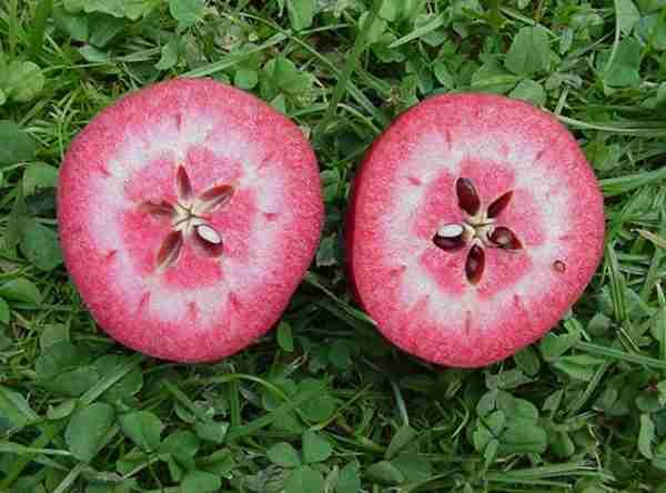 manzanas rosadas 2