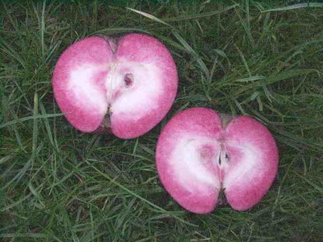 manzanas rosadas 3