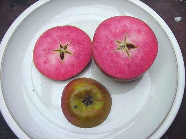 manzanas rosadas 4