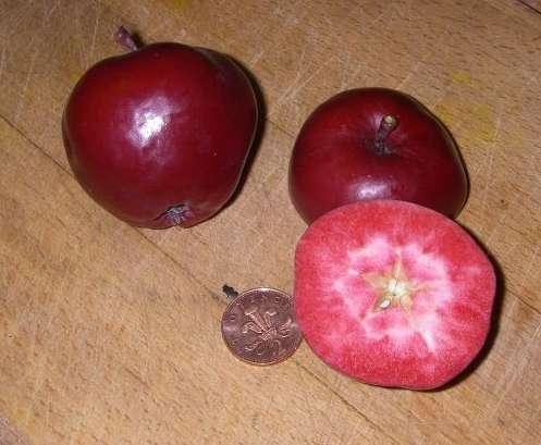 manzanas rosadas 5