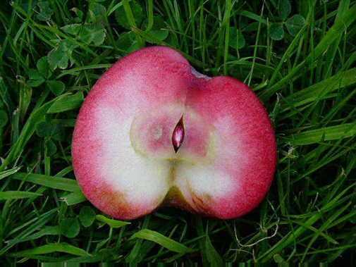 manzanas rosadas 7