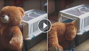 perrito-oso-gigante-de-peluche-1