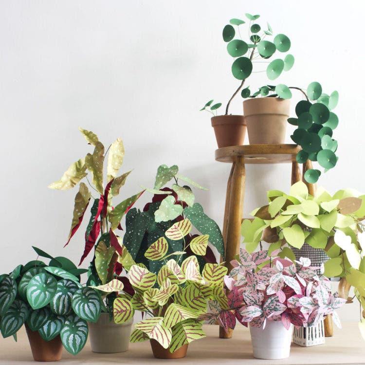 plantas de papel 13