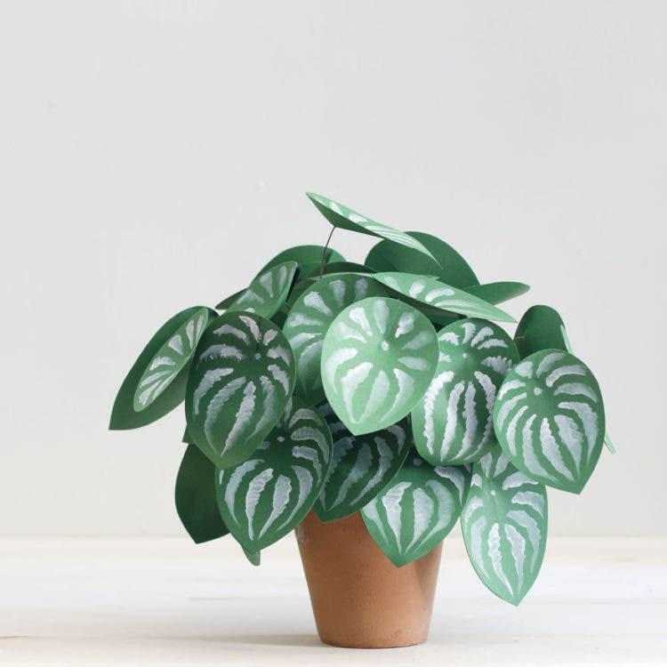 plantas de papel 2