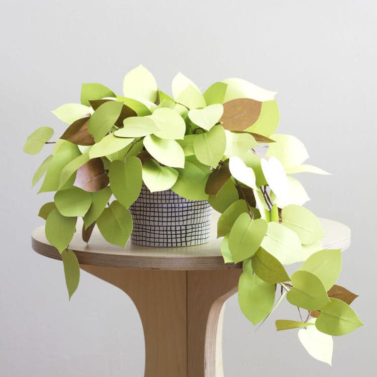 plantas de papel 5