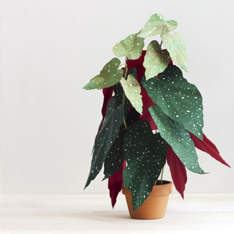 plantas de papel 8