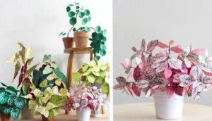 plantas de papel id