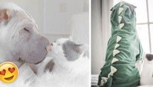 Paddington-y-buttler-amigos-perro-gato2