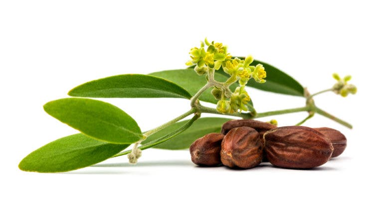 aceites-capilares2