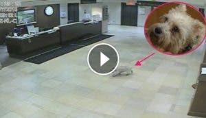 asombroso-perro-extrana-su-mama-la-persigue-al-hospital