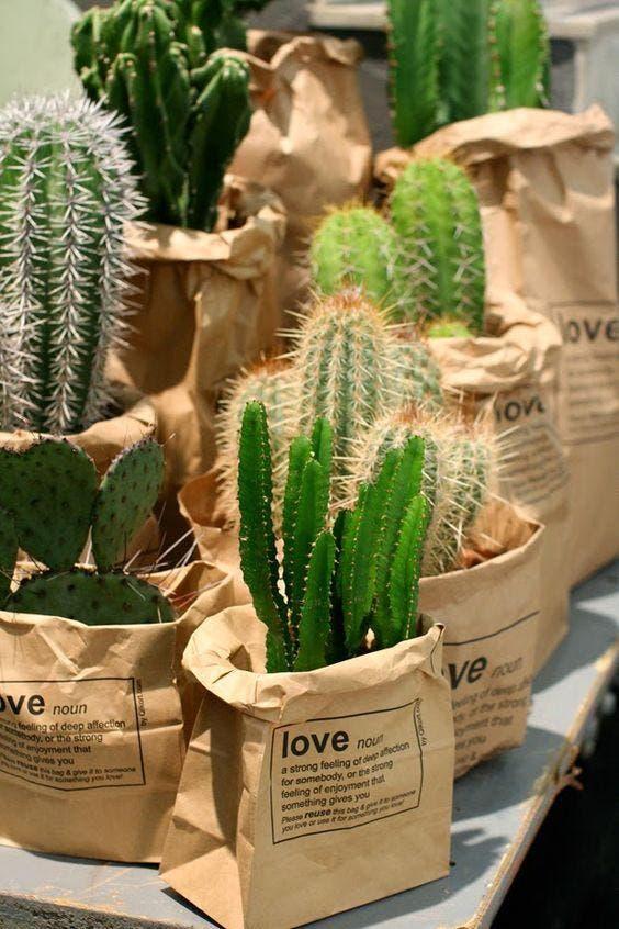 cactus para decorar 1