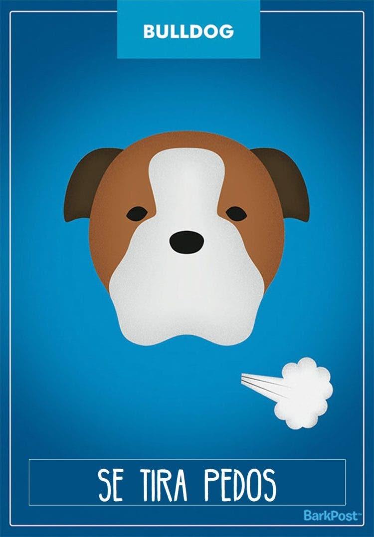 estereotipos-de-perros-11