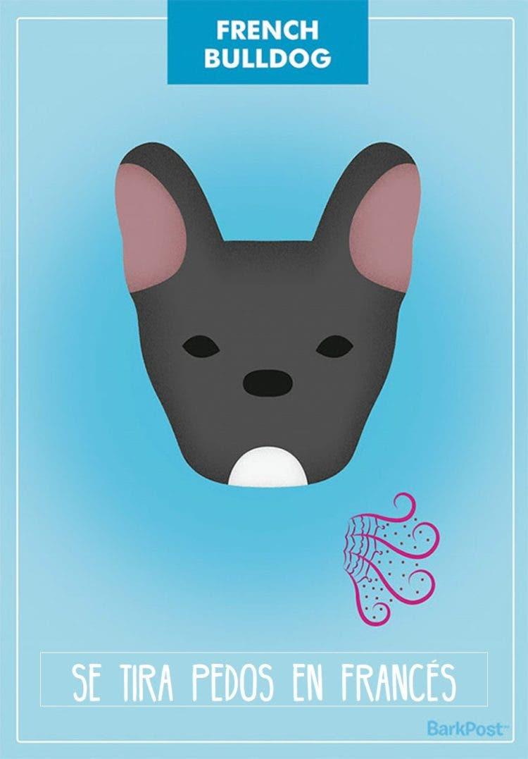 estereotipos-de-perros-12